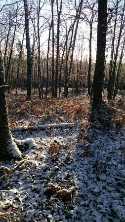 Mason Tract Pathway: Early November snowfall in northern Michigan and a little white tail buck rub