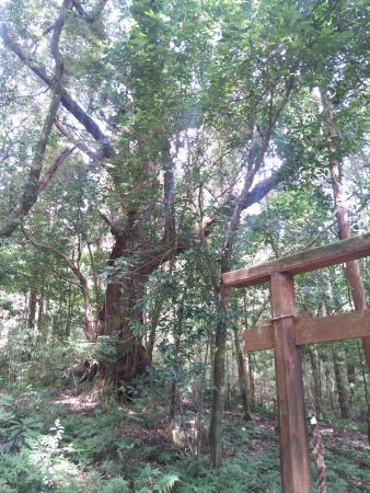 Yakushima, Japon : 牛床詣所