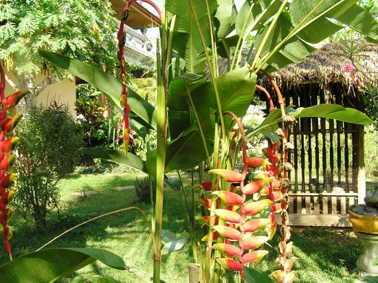 Pantai Mas: binnentuin