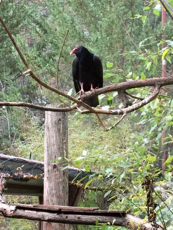 Wildlife Images - Rehabilitation & Education Center: photo1.jpg