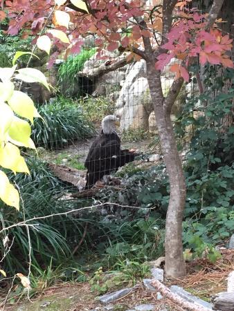 Wildlife Images - Rehabilitation & Education Center: photo2.jpg