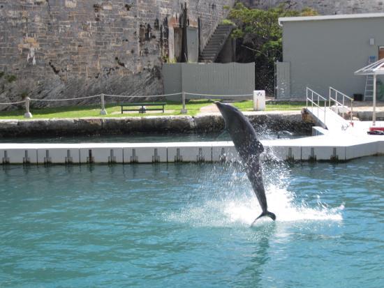Dolphin Quest: Бассейн с дельфинами