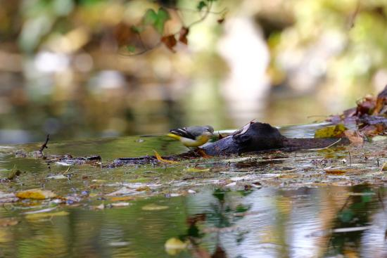 Moulin du David: River Birdlife
