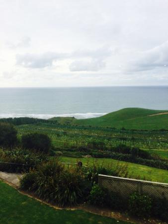 Νέο Πλίμουθ, Νέα Ζηλανδία: photo0.jpg