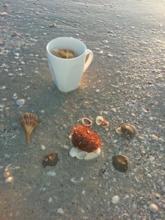 Tarpon Beach Condos: Best sunrises and morning shelling in Sanibel.