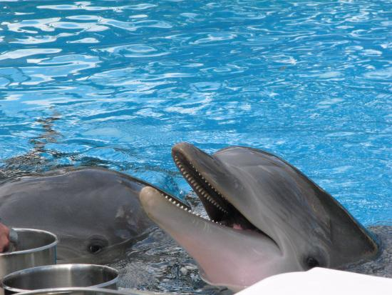 Cosmo Picture Of Siegfried Roy 39 S Secret Garden And Dolphin Habitat Las Vegas Tripadvisor