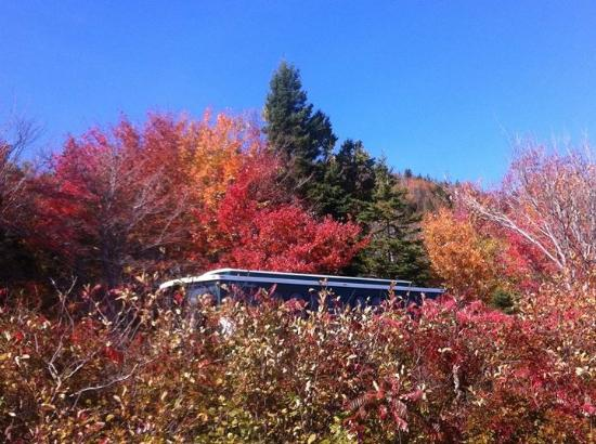 Oli's Trolley - Acadia National Park Tour: The beautiful colors of Acadia