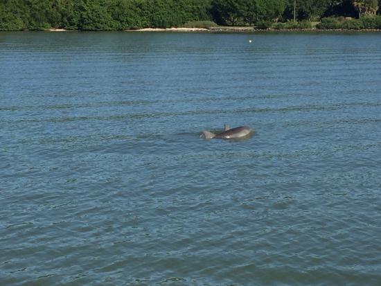 dolphin quest madeira beach