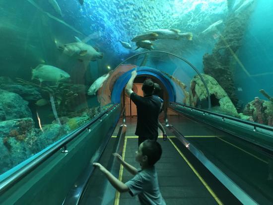 20151105_125458_large.jpg - Foto di Rayong Aquarium, Rayong - TripAdvisor