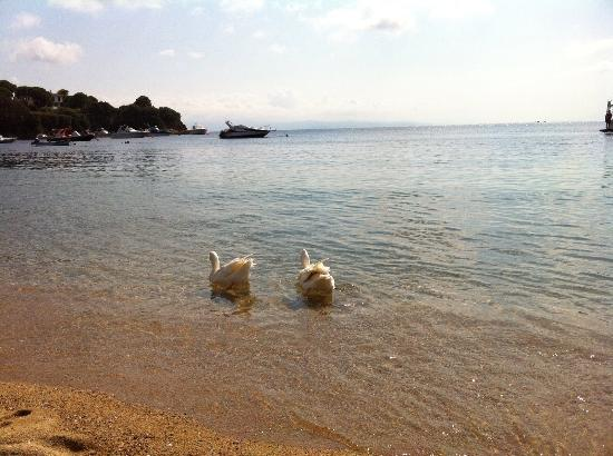 Kolios Beach Seaview Studios: Spiaggia dell'hotel