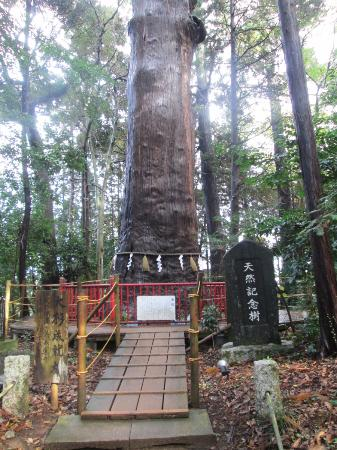 Makata Shrine : ご神木
