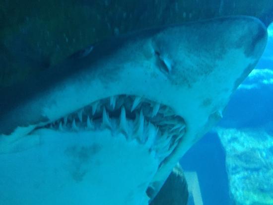 Дубай акулы достопримечательности дубай