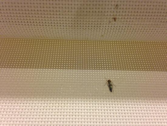 Sun Hotel: tons of bugs  in the room pressed on the shades/curtains