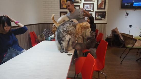 Genki Cat Theme Restaurant