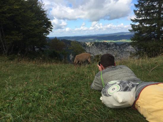 Creux du Van: my friend taking a picture of a ram