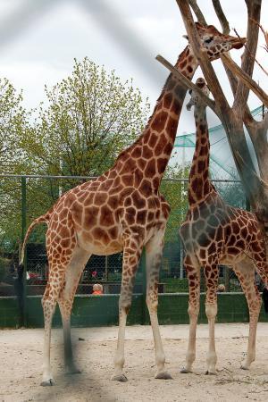 Jylland Park Zoo rabat zoo aarhus