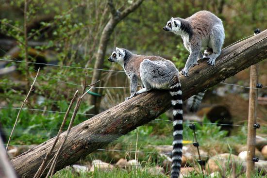 jyllands park zoo sæsonkort