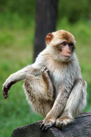Givskud Zoo rabat uk pornostjerne