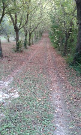 Monte San Vito, Italia: Strada verso.......