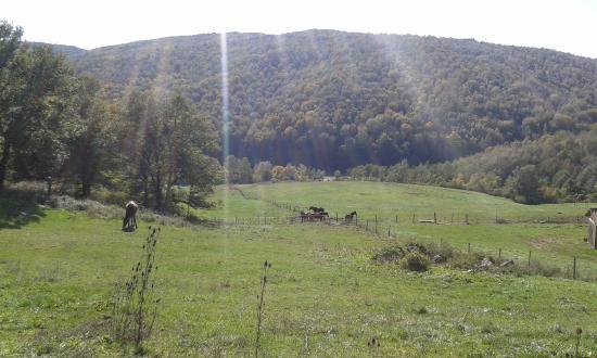 Agriturismo Il Cornacchino: Blick auf die Weiden