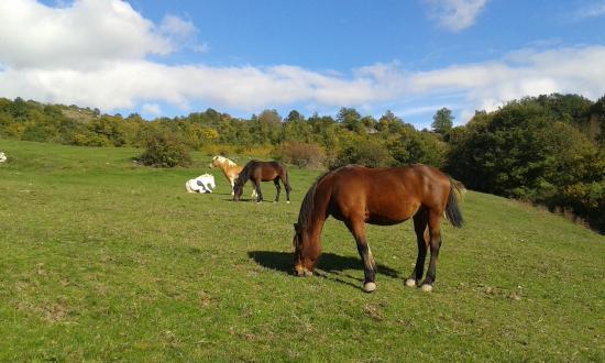 Castell'Azzara, อิตาลี: Die Pferde sind das ganze Jahr über draußen