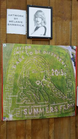 Summers Farm: aerial shot of the Taylor Swift corn maze
