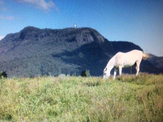 Cedar Glen Farmstay: One of the horses grazing....magnificent scenery