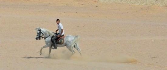 جولات بعربات تجرها الخيول