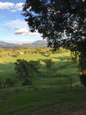 Attunga Park Country Retreat : Morning view