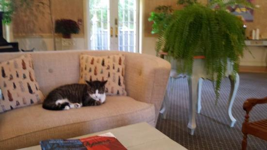 Clyde, resident cat in the library at Southampton Inn