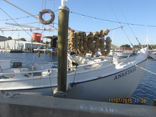 View from the street picture of tarpon springs sponge for Tarpon springs fishing
