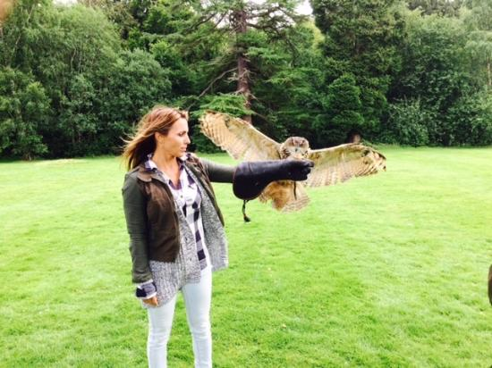 Dalhousie Castle Falconry Flash In Action