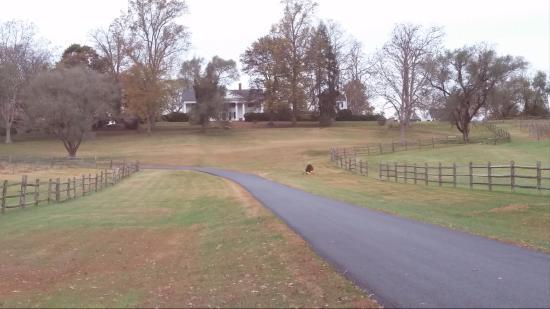 Locust Dale, VA: Driveway leading to hotel