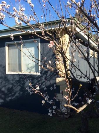 Gemelli Estate : Cottage