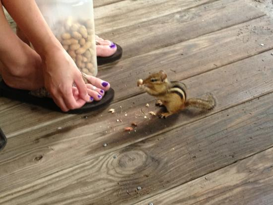 Nelson's Cottages: Feeding chipmunks on the front porch