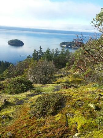 Madeira Park, كندا: 20151109_101447_large.jpg