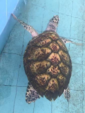 Padang Kemunting Turtle Management Centre