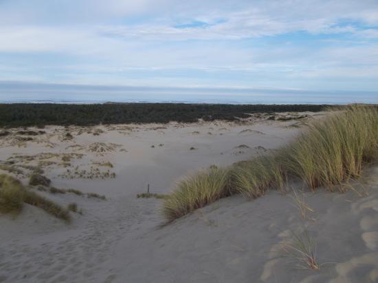 BEST WESTERN Pier Point Inn: The sand dunes nearby