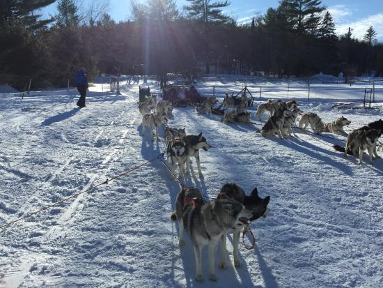 West Wardsboro, Вермонт: Huskyworks Dogsledding
