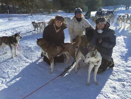 West Wardsboro, VT: Huskyworks Dogsledding