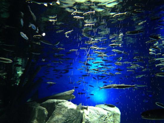 サケのふるさと千歳水族館, 支笏湖のイメージの水槽
