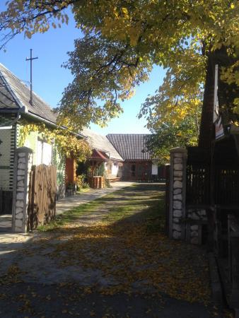 Guesthouse Ileana: The courtyard