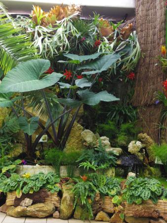 Plantes tropicales photo de jardin aux papillons vannes for Jardin aux plantes