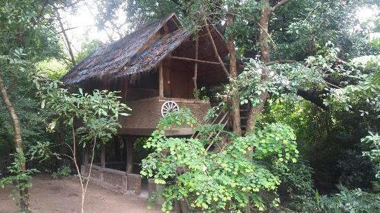 Jiwes Hide Out Forest region