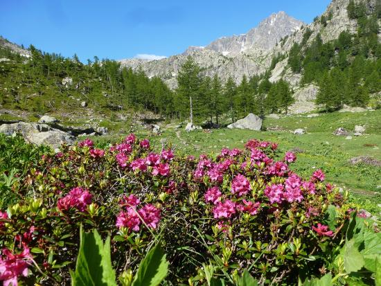 Provence, Fransa: Le Mercantour