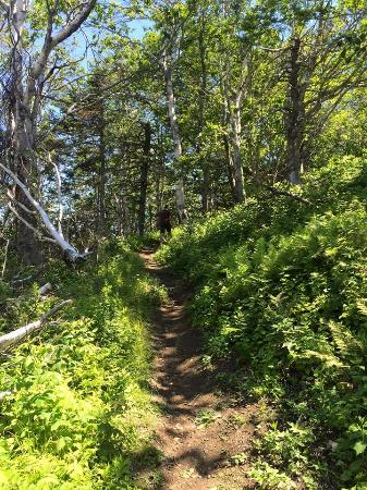 Parrsboro, Kanada: trail