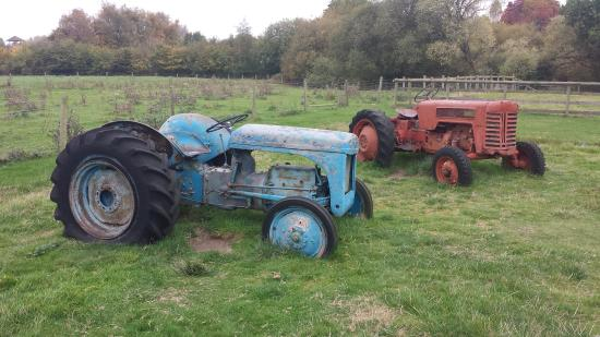 Kingsbury, UK: Old tractors