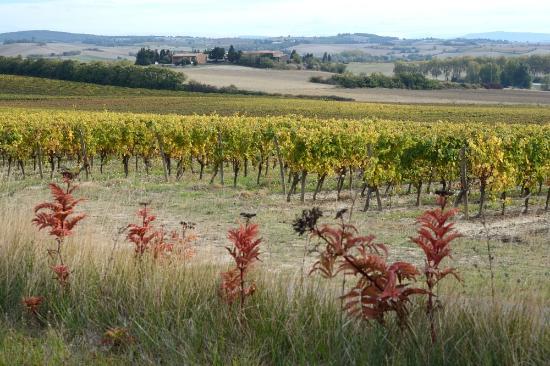 Castex, Frankrijk: The Vineyard