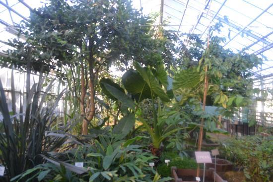 serre - Photo de Jardin Botanique Jean-Marie Pelt, Villers-lès-Nancy ...