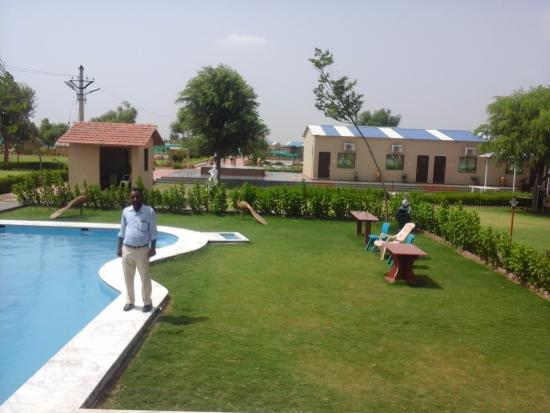 great pool side green environment picture of shagun resort